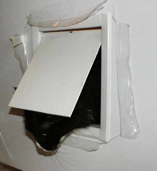 Дверца для кошек своими руками фото пошагово 48