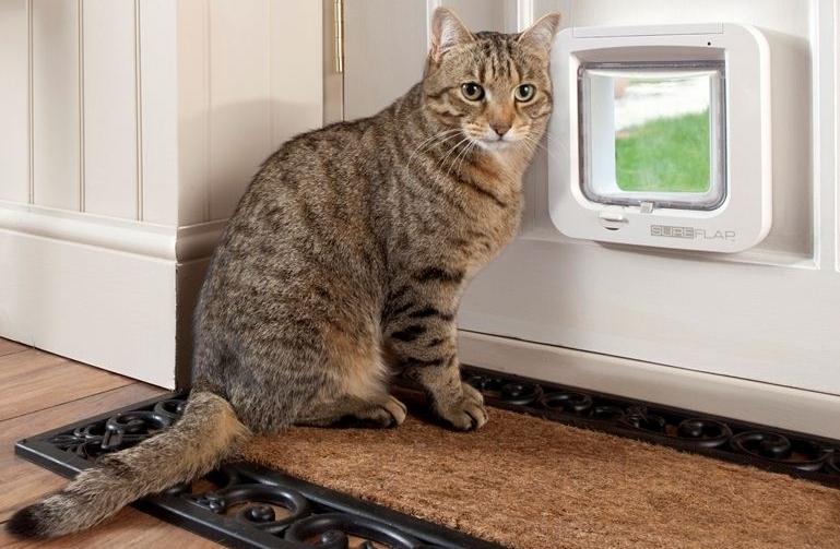 Дверца для кота в туалет