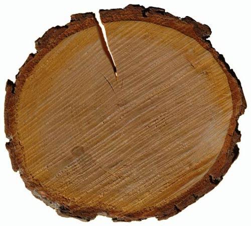 Срез древесины ольхи