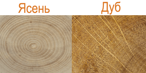 Сравнение древесины ясеня и дуба