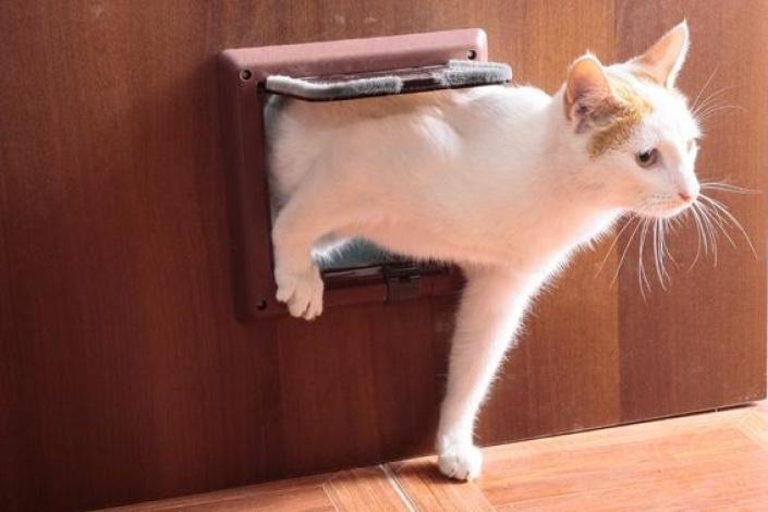 Дверца для котов