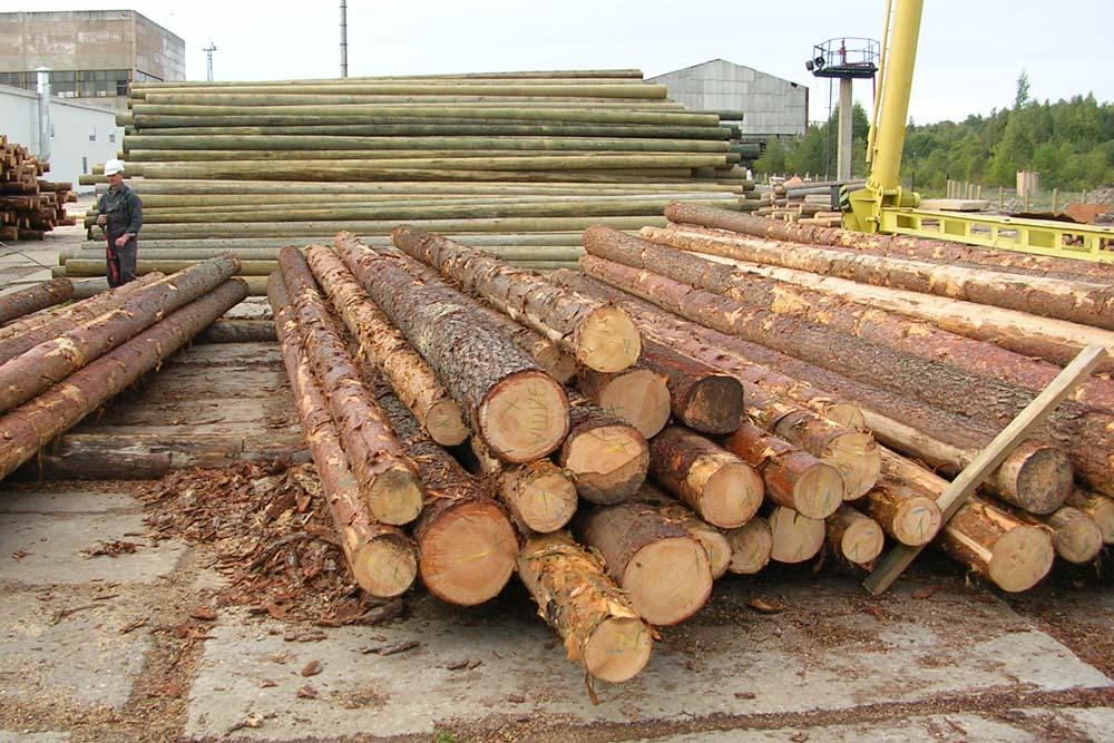 Заготовка древесины