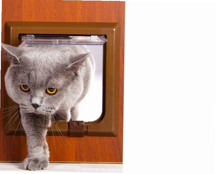 Кошачья дверца